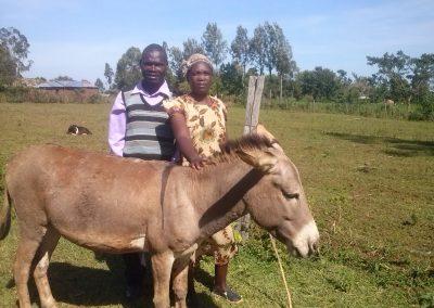 Titus'Donkey